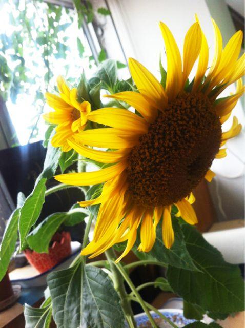 flor vaso decoração