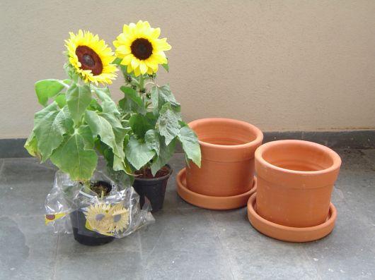 como plantar em vaso