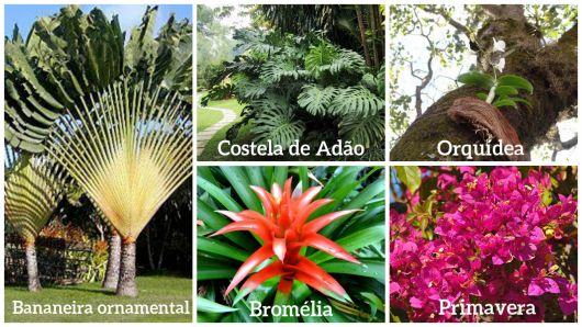 tipos de plantas e flores