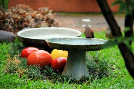 comedouro pássaro jardim
