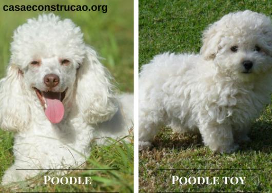 poodles cachorros para apartamento