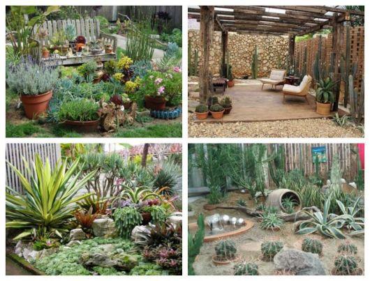 Montagem com fotos que mostram como cuidar de cactos no jardim.
