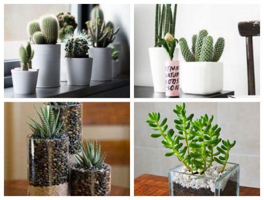 Montagens com diferentes tipos de vasos com cactos.