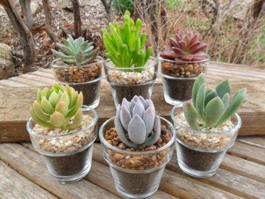 Vasos transparentes com cactos