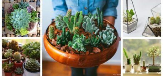Montagem com vários tipos de cactos e vasos para plantá-los.