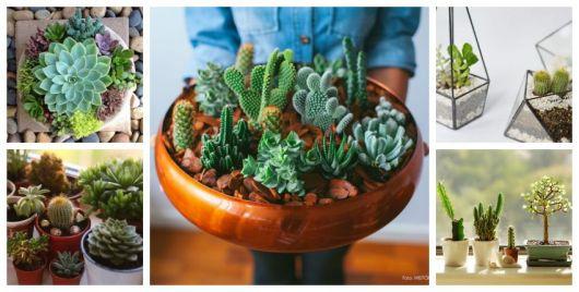 Como Cuidar De Cactosguia Completoplantar E Cultivar