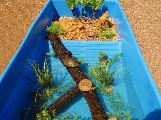 Caixa azul com plantas para tartaruga.