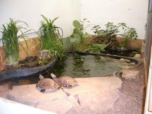Diversas plantas em volta do aquário.