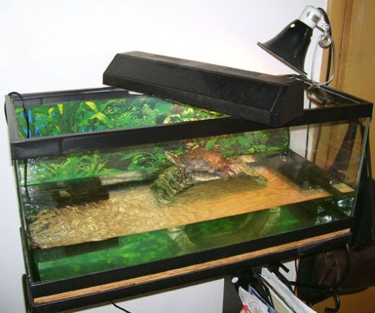 Aquário para tartaruga de vidro com iluminação.
