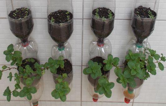 horta em garrafas de refrigerante
