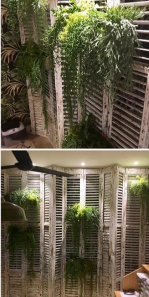 rústico com plantas