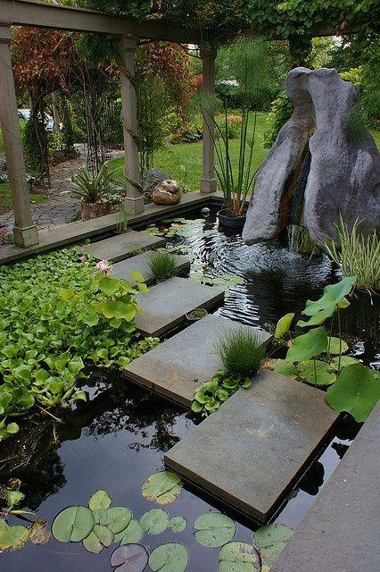 espelho d'água com plantas e caminho na superfície