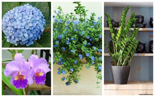dicas de plantas