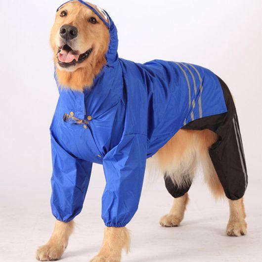 Cachorro grande vestindo uma capa de chuva azul com capuz