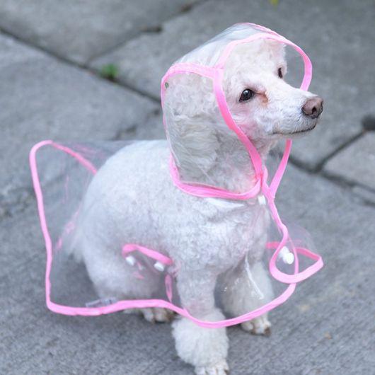 Cachorro sentado vestindo uma capa de chuva transparente