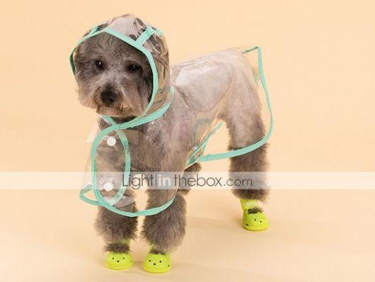 Cachorro vestindo uma capa de chuva transparente e sapatos amarelos nas quatro patas