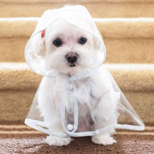 Cachorro pequeno sentado olhando para baixo vestindo uma capa de chuva transparente