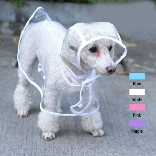 Poodle vestindo uma capa de chuva transparente