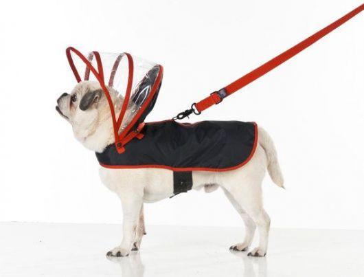 Cachorro visto de perfil vestindo uma capa de chuva com um capuz transparente