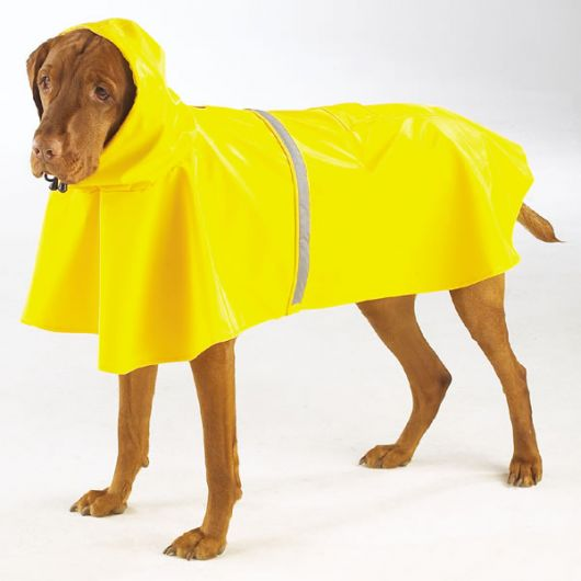 Cachorro grande vestindo uma capa de chuva amarela com gorro