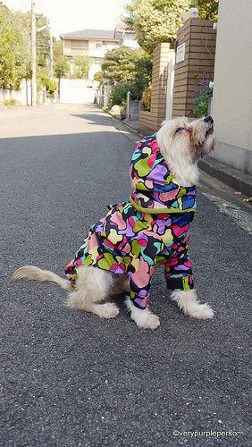 Cachorro olhando para cima vestindo uma capa de chuva colorida
