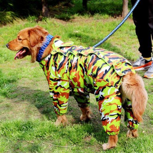 Foto de cachorro perto seu dono com capa de chuva camuflada
