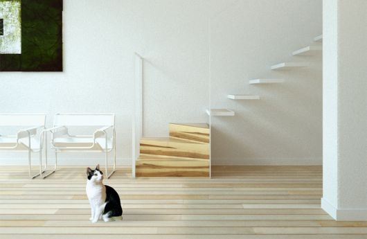 Escada flutuante feita de madeira em um cômodo todo pintado de branco com um gato na frente