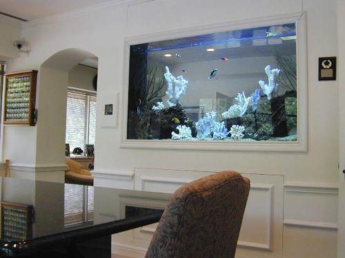 Aquário de parede dividindo dois cômodos. Seu interior possui corais brancos e pequenos peixes nadando.