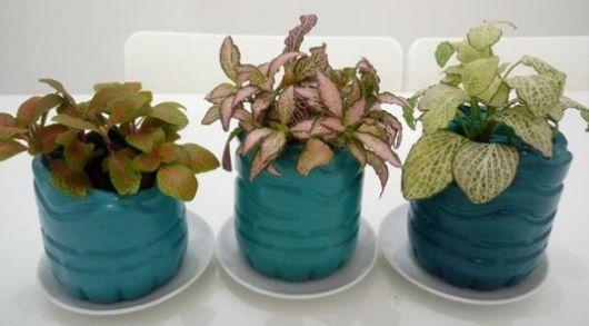 vasinho colorido para plantas