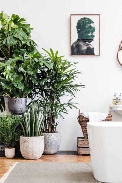 vários vasos de plantas ao lado de sofá na sala de apartamento
