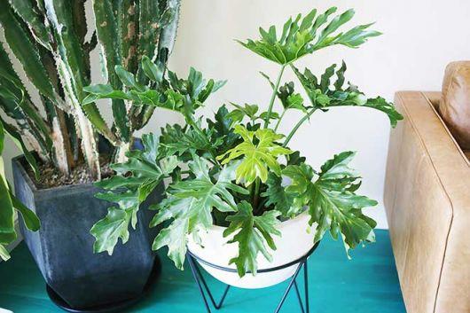 planta imbé do lado de sofá