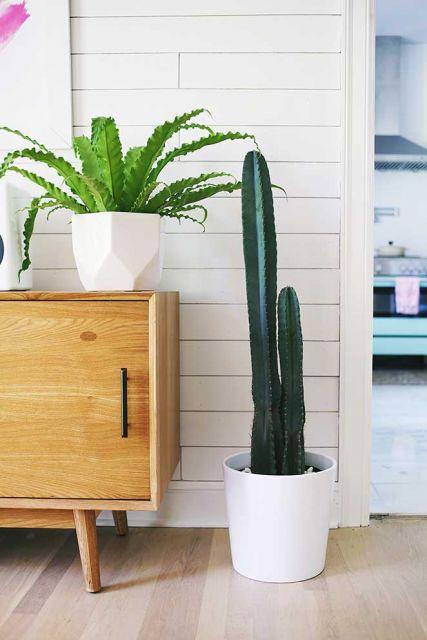 cactus do lado de criado-mudo