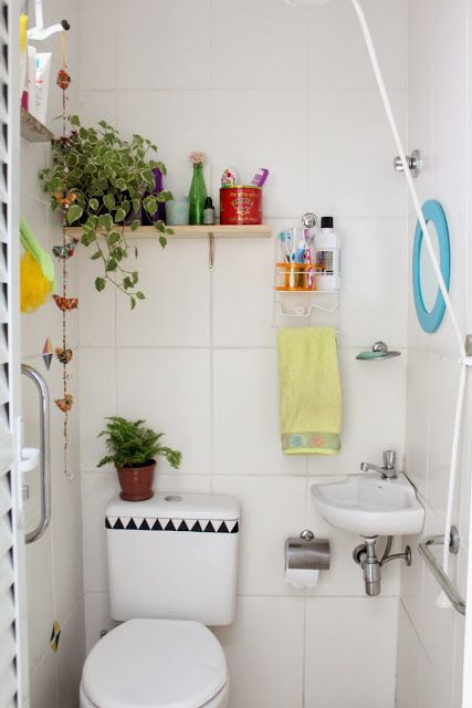 plantas em prateleira e em vaso sanitário em banheiro