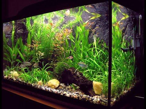 aquário de água doce com muitas plantas