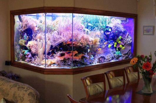 aquário de água doce em parede