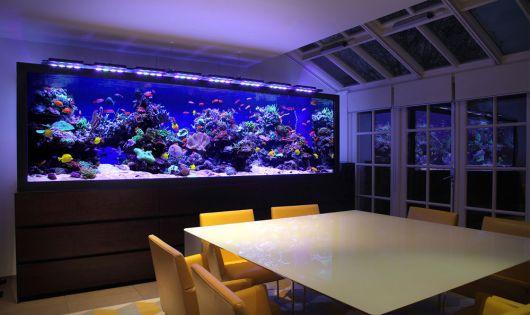 ideias para aquário de água doce