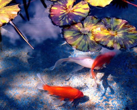 peixes para aquário de água doce