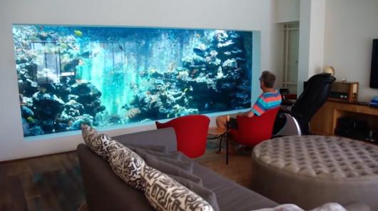aquário de água doce para relaxar na sala