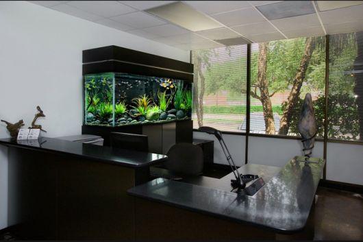 aquário de água doce no escritório