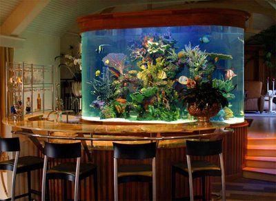 mesa com aquário de água doce