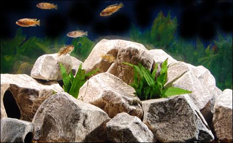 tipos de pedra para aquário de água doce