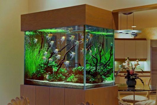 aquário marinho para decorar