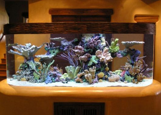 aquário marinho decoração