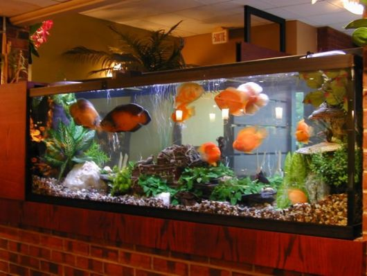 aquário marinho peixes