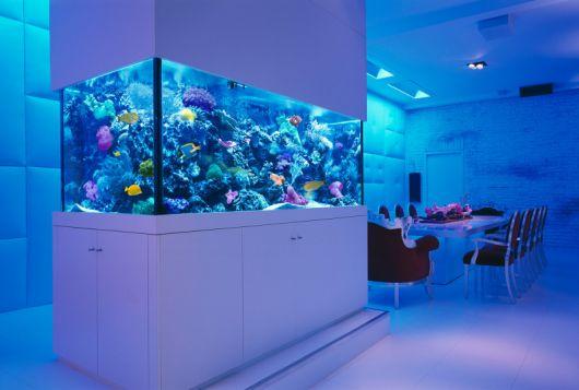 aquário marinho luz azul