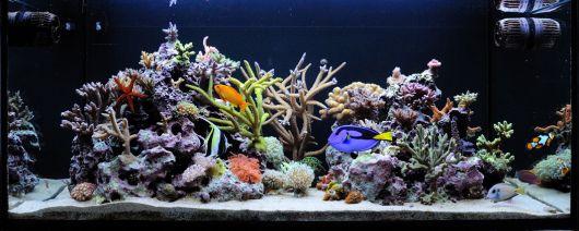 aquário marinho decorado
