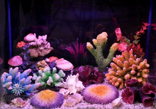 aquário marinho corais e esponjas