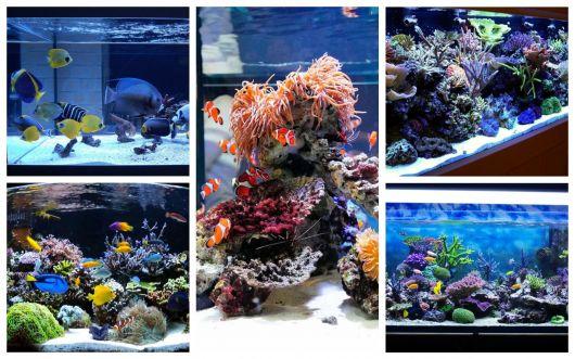 aquário marinho modelos para investir