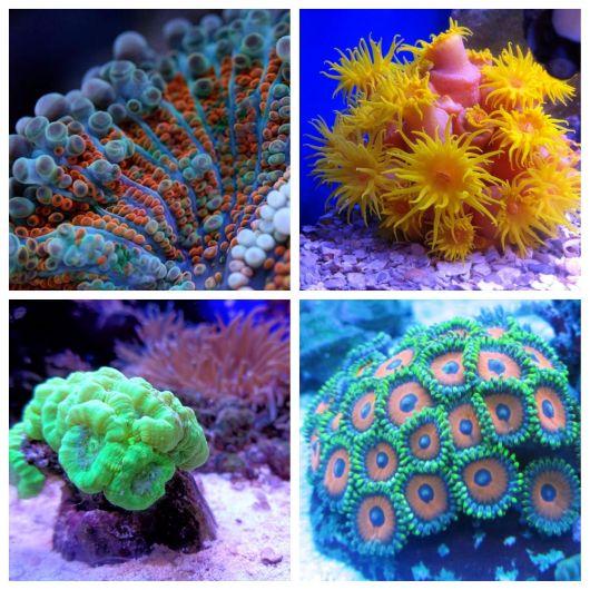 aquário marinho corais