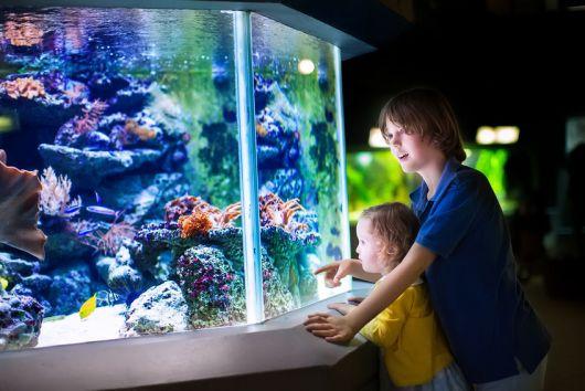 aquário marinho divertido